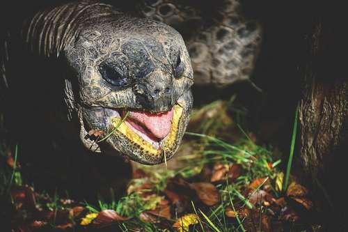 quelle alimentation pour ma tortue de terre