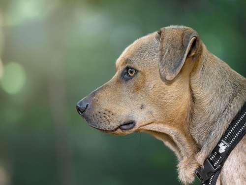 bien choisir son collier pour chien