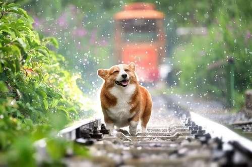 promener son chien sans tiques