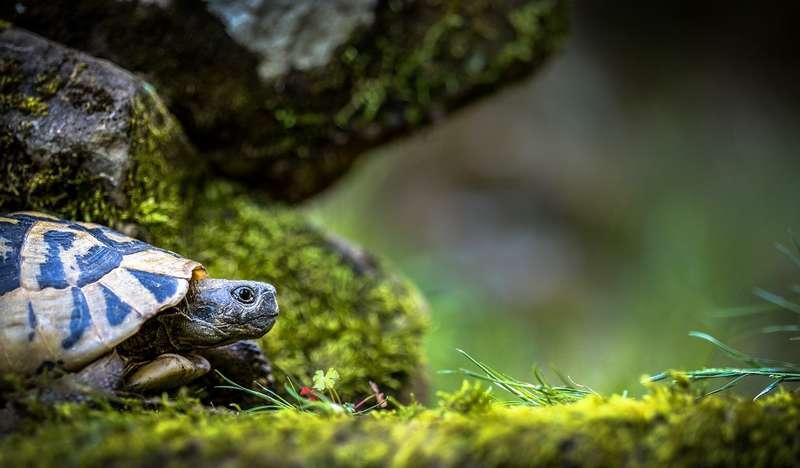 s'occuper d'une tortue de terre