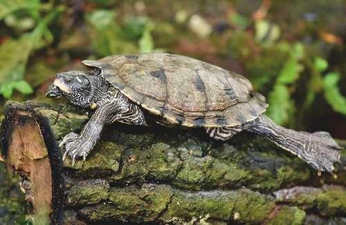 aider ma tortue à hiberner