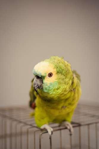 caisse pour perroquet