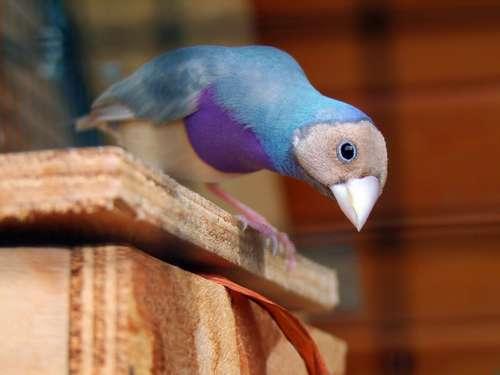 aider son oiseau à avoir de belles plumes
